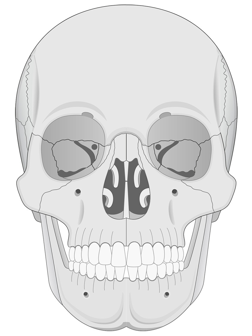 Anterior view of human skull (black and white)