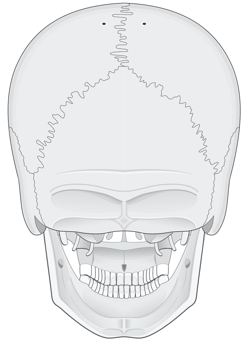 posterior view of human skull (black and white)