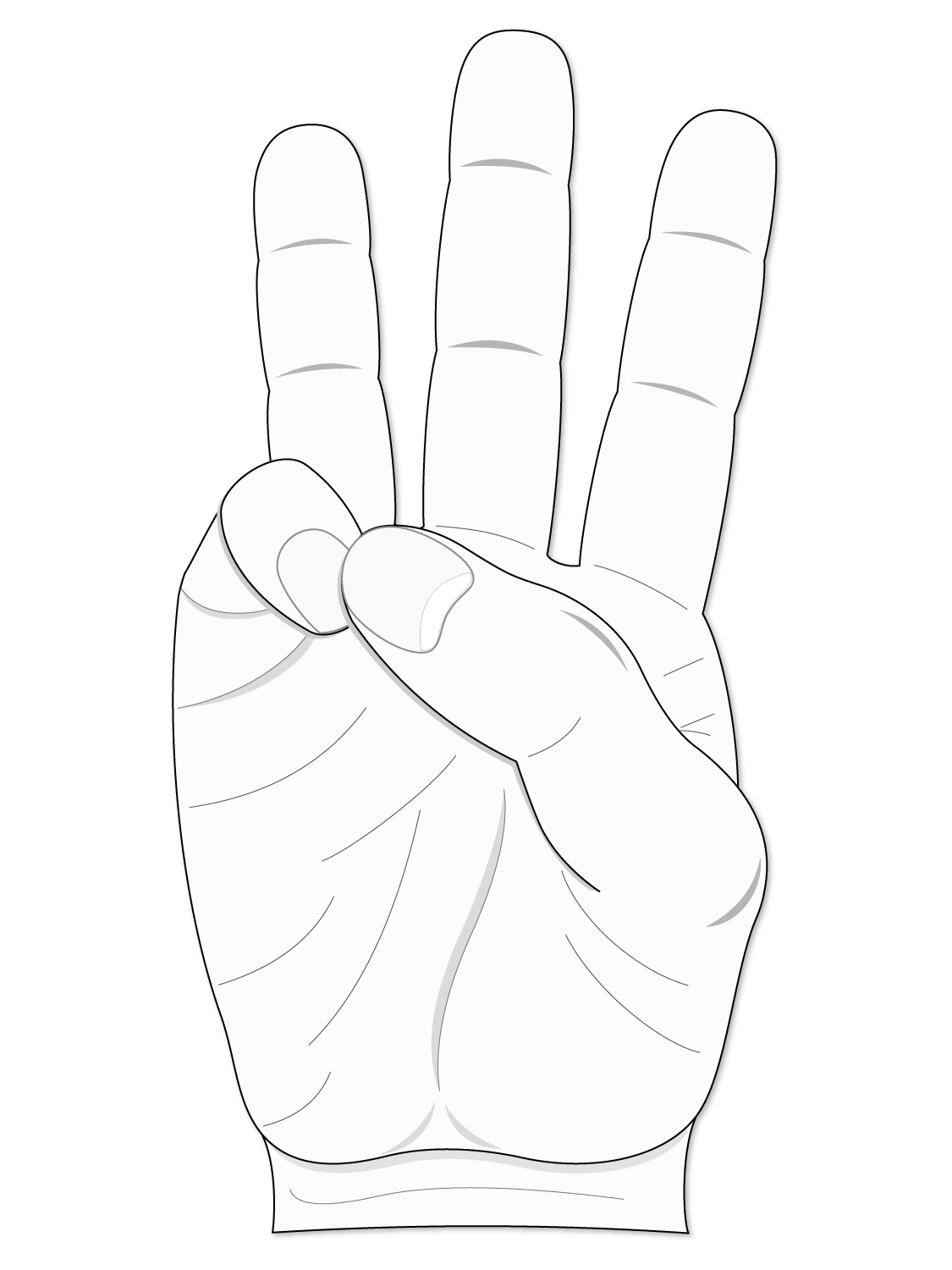 Function: thumb opposition.