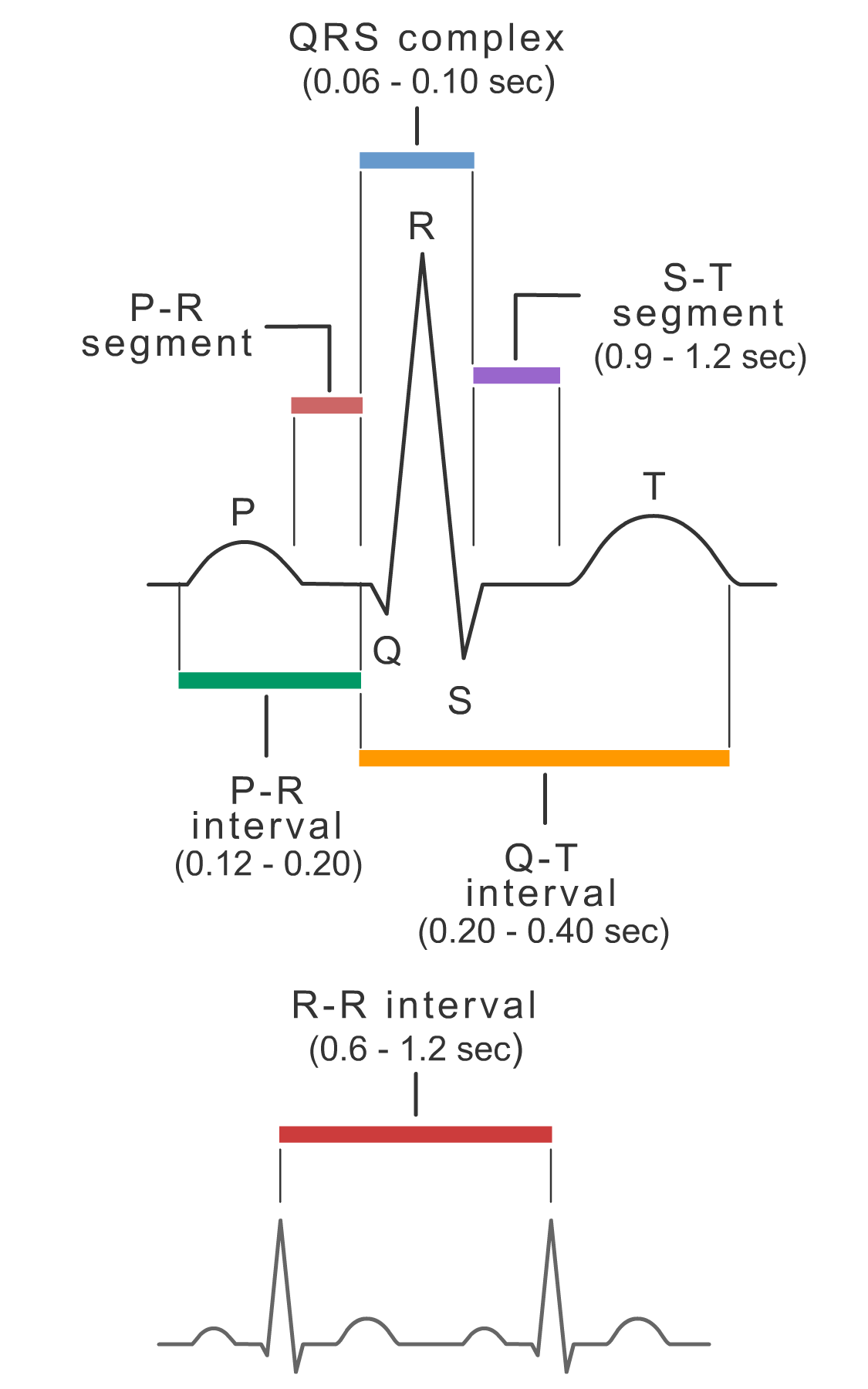 Durations of ECG waves, segments, and intervals