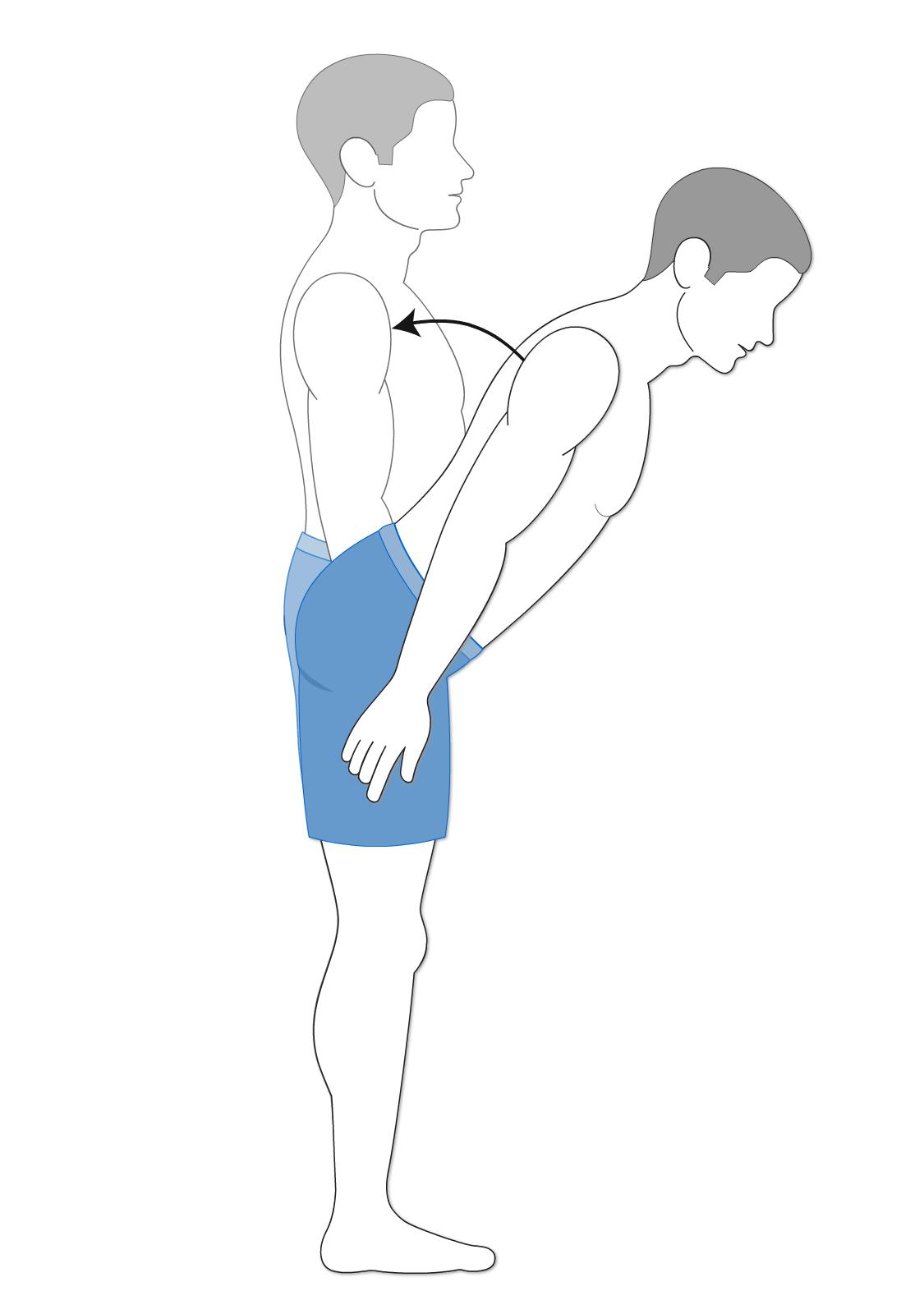 Flexion of the vertebral column