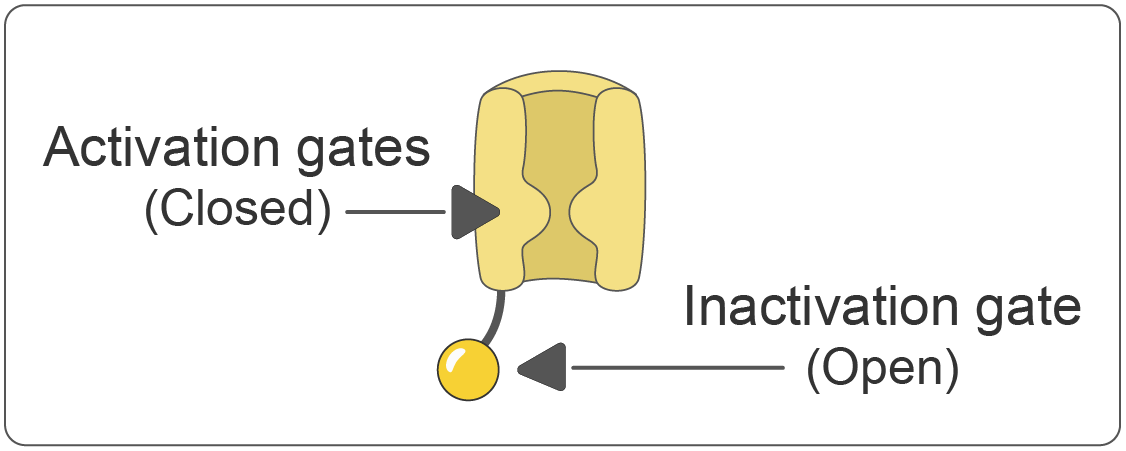 Voltage-gated sodium (Na+) channel - closed state